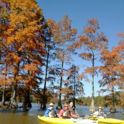 fall cypress tour